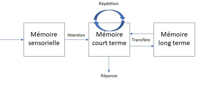 Tout savoir sur la mémoire à court terme